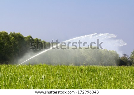 sprinkler head watering the grass in farm