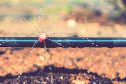 Sprinkler systems, drip irrigation, watering lawns. Drip Irrigation System Close Up. Water saving drip irrigation system being used in a organic onions field. toned