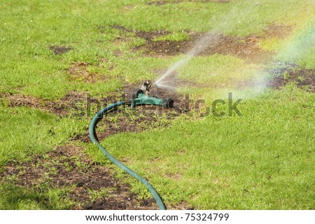 Sprinkler watering lawn with patches of new seeding