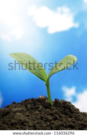 sprout - stock photo