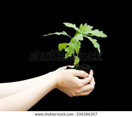 Sprout a young oak tree in a female hands isolated on a black background. The concept - the life beginning, care, successful growth.