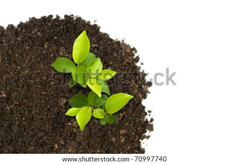 Sprout green plants growing on soil manure in the birds eye view. - stock photo