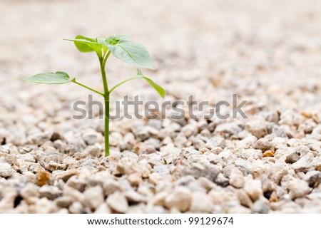 Sprout growing out of Rock in the Garden