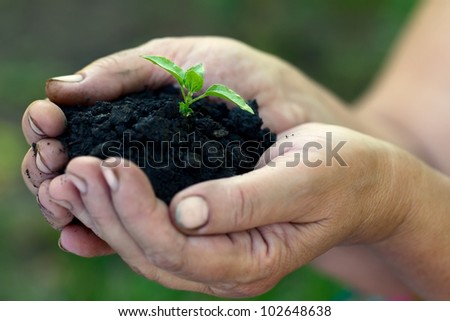 Sprout growing out of the ground which is in women's hands