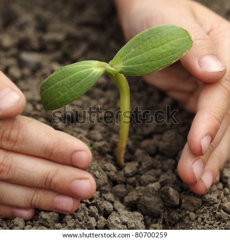 sprout in children hand