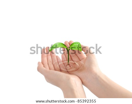 Sprout in human hands in water