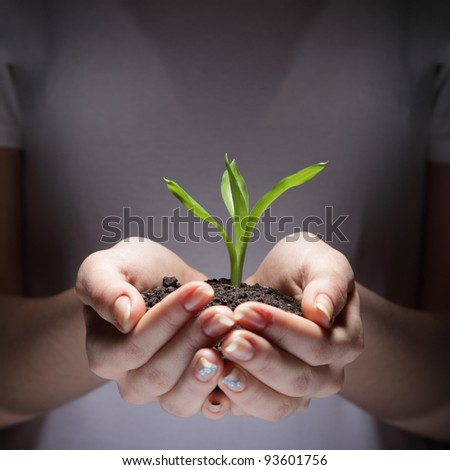 sprout in woman hands - stock photo