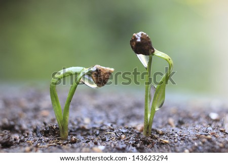 Sprout of the spinach - stock photo