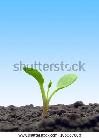 Sprout on blue sky background.