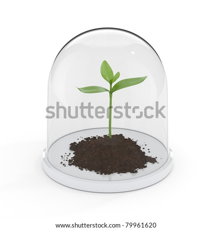 Sprout under a protective dome. Conceptual illustration of growth protection.