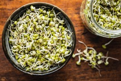 Sprouted green mung beans. Mung sprouts in bowl on wooden table. Top view.