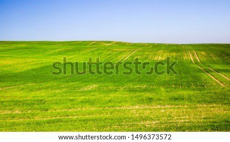 sprouted green young grass in summer or spring, Sunny bright weather #1496373572