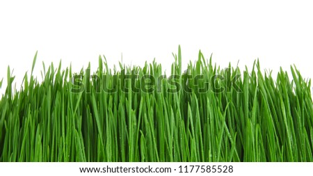Sprouted wheat grass on white background #1177585528