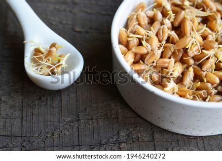 Sprouted wheat seeds in a white  bowl on a wooden background. Wheatgerm. Healthy diet, vegetarian food or superfood concept with copy space.Selective focus. Stock photo ©
