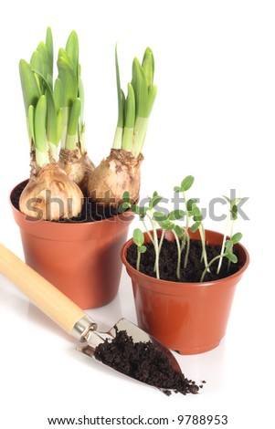 Sprouting bulbs and seedlings in pots with garden scoop, isolated on white background