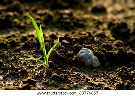 sprouting plant in dry soil