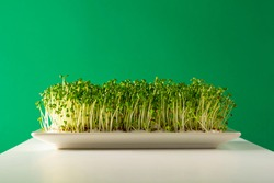 Sprouts, germinated seeds with green backgroundand luminous white table