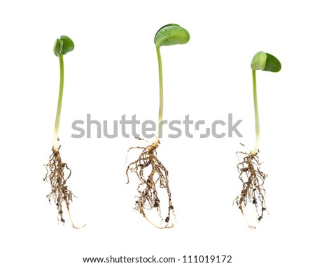 Sprouts isolated