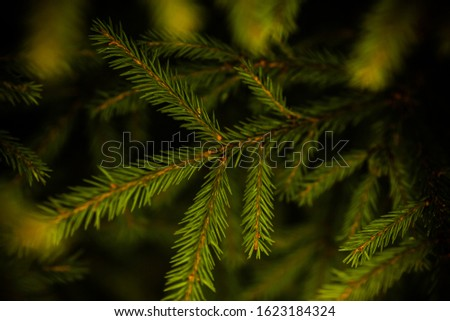 Spruce branch. Beautiful branch with bright green needles, background with fir tree. Concept for New Year, Christmas and other holidays.