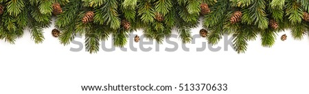Spruce branches with cones isolated on white