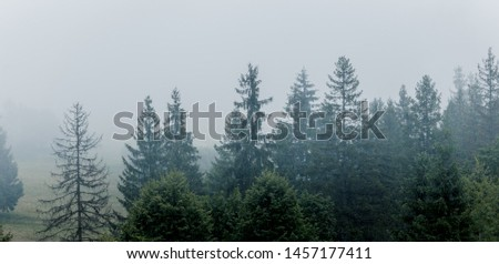 Spruce forest at foggy morning. Panoramic view. #1457177411