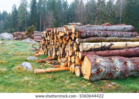 Spruce logs laying in a pasture