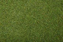 Spruce needles background