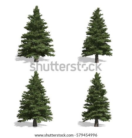 spruce trees, isolated on white background.