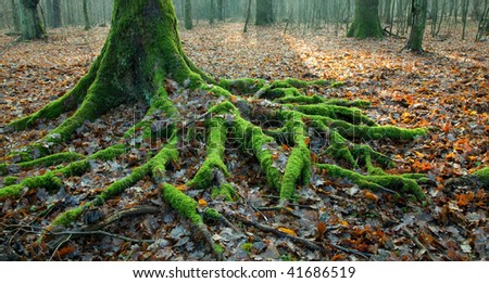 Spruce trunk and roots growing over forest bottom