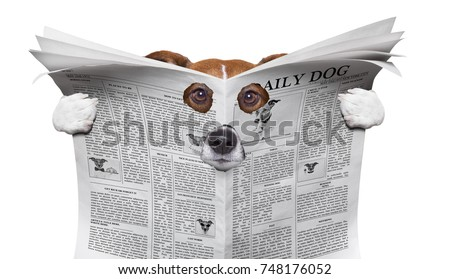 spy curious  dog  peeping  through hole in  newspaper, paper or magazine, isolated on white background