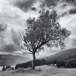 square black and white landscape with alone strange tree on the hill over the high mountain lake