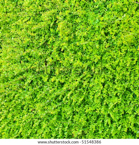 Square detail of lush green bush