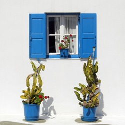 Square format: Two green cacti in bright blue planting pots, against a white wall, below a window with blue wooden shutters, with a green plant with red flowers on the sill, Mykonos, Greece.