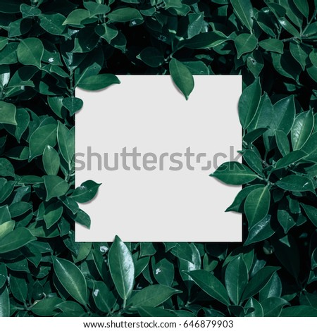 Square frame, Creative layout made of tropical flowers and leaves with paper card note. Flat lay. Blank for advertising card or invitation. Flat lay. Nature concept. #646879903
