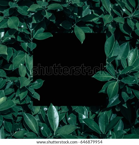 Square frame, Creative layout made with green leaves background. Blank for advertising card or invitation. Nature concept. Summer poster. black frame. #646879954