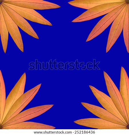 Square frame of yellow dry leaves of lupine at the corners isolated on blue background