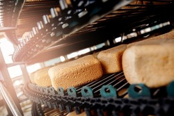 Square fresh bread cools down on conveyor automatic production line bakery after stone oven.