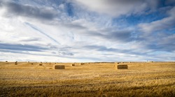 Square hay bales lying in a harvested field on the Canadian Prairies under a dramatic sky in Rocky View County Alberta.