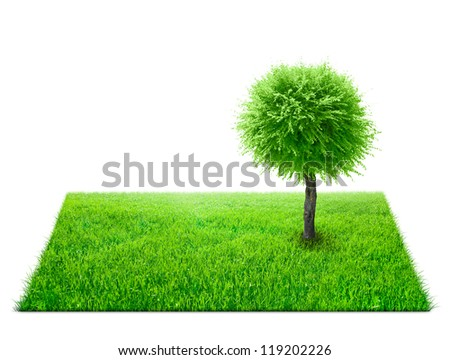 Square of green grass field and tree on it over white background