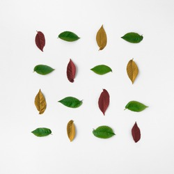Square pattern made of colorful tree leaves isolated on white background. Minimal flat lay seasonal nature concept.