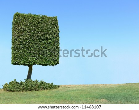 Square shape tree with copyspace