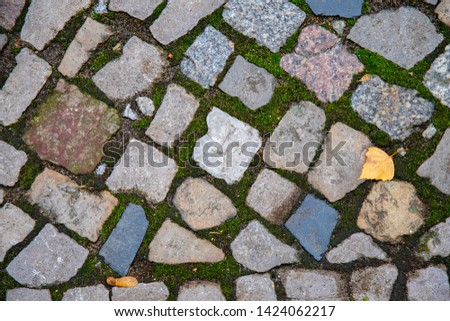 Square shaped granite stones paved sidewalk overgrown with green moss. Yellow fall leaf on background of cobblestone road in Berlin city of Germany. Stone texture. Fall backdrop. Autumn background. #1424062217