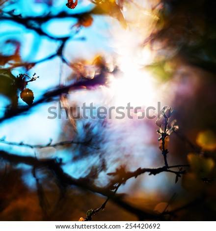 Square vivid autum sun leak branch leaves bokeh abstraction background backdrop