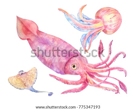Squid, batoidea, jellyfish. Sea set, watercolor illustration isolated on white.