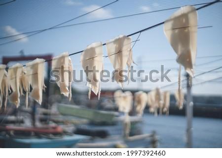 Squid drying like laundry at Yobuko fishing port, Karatsu City, Saga Prefecture. - 佐賀県唐津市呼子 ストックフォト ©