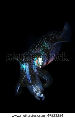 Squid isolated with black background.