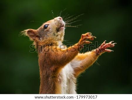 Squirrel #179973017