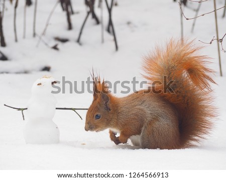 Squirrel building a snowman, cute winter photo shoot