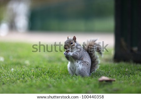 Squirrel Eating a Biscuit - stock photo