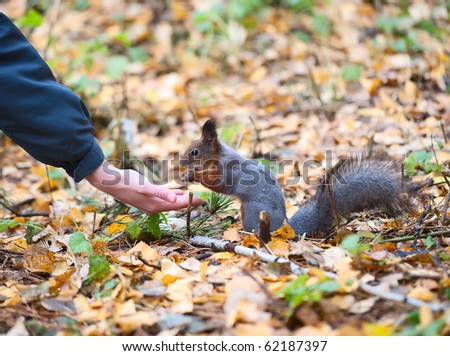 Squirrel eating from a hand